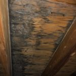attic mold cleveland ohio